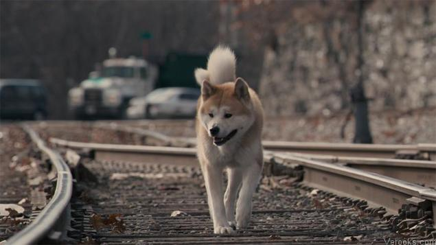 Family Movies Hachi: A Dog's Tale
